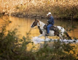 Cowboy-HorseWaterbyABStudios
