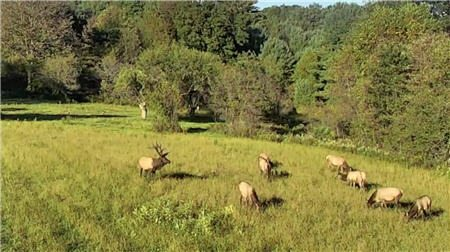 Elk Cam Huge Success