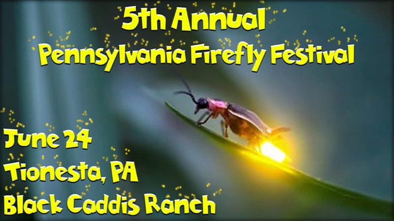 2017 Firefly Festival Updates