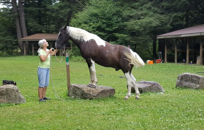 Outdoor Adventures Equestrian Visiting The Pa Great