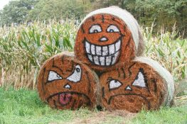 Pick a Peck of Pumpkins and More at Paul's Pumpkin Patch