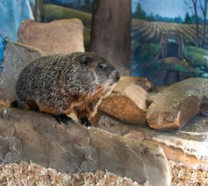 Spend a Day with the Kids in Punxsutawney
