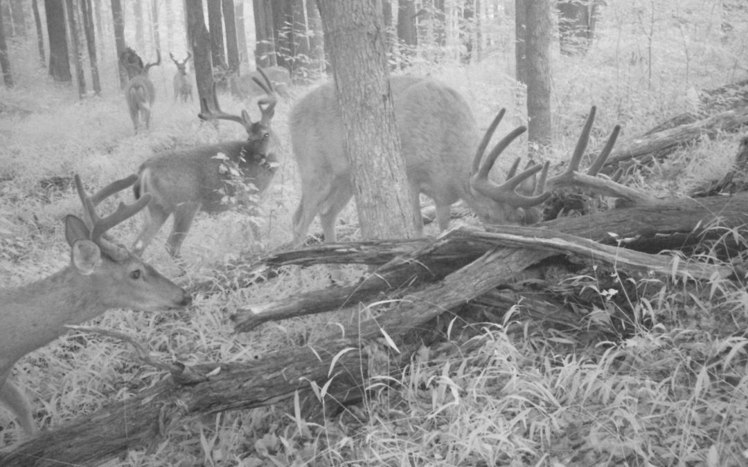 Hunting Season Approaches in the Pennsylvania Great Outdoors