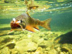 Kaleidoscope the Series: Domtar Fish Nursery